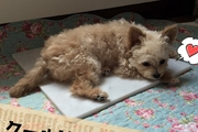 大理石で愛犬も快適ひんやり♪ クーラーをつける程ではない暑さにも効果的!