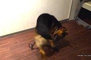 犬の精神病『強迫性障害・常同行動』の原因と対策