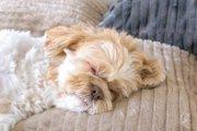 犬に愛される人が持つ5つの共通点