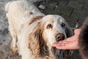 犬が鼻でツンツンしてくる時の4つの気持ち
