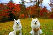 紅葉の森に連なるカフェやレストラン、軽井沢ハルニレテラスで秋を満喫!