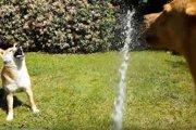 暑い季節に最適♪ホースの水で遊ぶ柴犬さんが楽しそう!