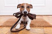 犬の散歩は「食前」と「食後」どっちに行くのがいいのか?