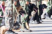 軍用犬とは?最も適していると言われる犬種まで