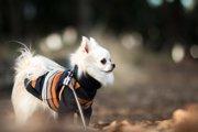 冬にやりたい犬の散歩対策と気を付けたい3つのこと