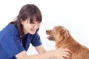 新人動物看護師の成長【動物が好きなだけでは続けられない】