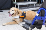 補助犬について