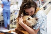犬の入院費は一体いくら?値段の相場や料金が高い理由