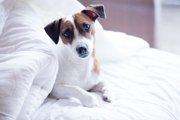 犬が一緒に寝てくれなくなる4つの理由