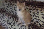 お風呂大好き柴犬のオシャレ過ぎる入浴スタイル!(まとめ)