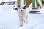 寒い屋内に2日間置き去りにされた2歳の男の子を温め続けた愛犬