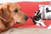 奇跡の救出!子猫を救った元保護犬・アラゴン
