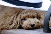 老犬の嘔吐は何かの中毒?病気が原因?