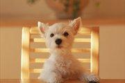 【3/31まで!】わんちゃんの本音って!?~腸内フローラ測定付ペット保険のご紹介。