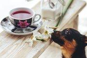 愛犬と楽しむ身近なハーブティー