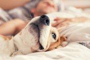 犬が朝に飼い主を起こしてくる5つの心理