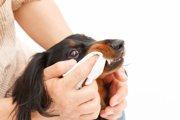 犬の口臭がひどい!原因と治療方法、予防策まで
