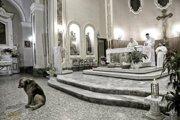 毎日教会に通い続け村中から愛される南イタリアの忠犬「トミー」