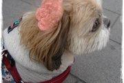 愛犬のリボンの作り方!髪留めでオシャレを楽しもう♪