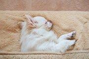 犬が寝るときにクルクル回る理由とは?