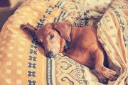 犬が痛みを感じたときに見せる6つの行動