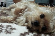 眠らせて…午前3時に起きて吠えまくる愛犬と我が家の解決法