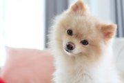 犬の「良いウンチ」と「悪いウンチ」とは?色や固さを見てみよう