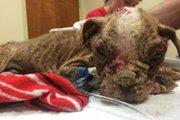 ブリーダーに見捨てられたボロボロな子犬が起こした2つの奇跡