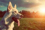 勇敢な性格を持つ犬種5選