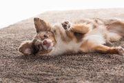 犬が抱っこをせがむようになる心理と対処法