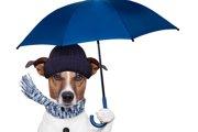 犬の気象病について