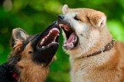 攻撃的なわんこの飼い主さん、犬の攻撃行動について知っていますか?