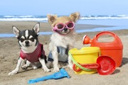 犬も日焼けをする?症状や気を付けたいこと