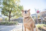 犬が散歩中によそ見をする3つの理由とやめさせる方法