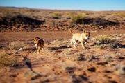 砂漠地帯に置き去り…命の危機にさらされた2匹の子犬がある兄弟によって無事に保護された!