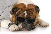 私が考える『犬の擬人化』について