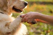 保護犬物語。幸せを運んだラッキー