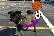 事故で3本足になった犬ー飼い主が毎日新しい足を描いてくれる?!