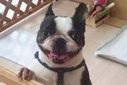 保護犬との生活 「あなたは、最後の飼い主になる覚悟はありますか?」