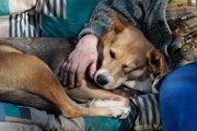 シニア犬に多く見られる【ロコモティブシンドローム】について