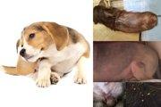 かゆがる犬の注意点はココ!見逃し厳禁「皮膚病トリガー」5つ