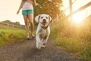 お散歩をしているときの様子で分かる愛犬の気持ち