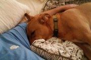 突然入院した飼い主と久々に再会した愛犬の喜ぶ姿が胸をうつ!
