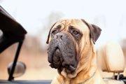 「愛犬の生きた証を残したい」末期がんに侵された犬の素敵な写真