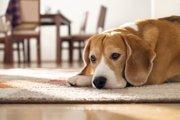 目の見えない犬を飼うときの注意点と付き合い方