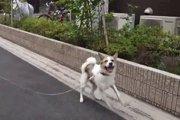 守られた小さな命!殺処分当日に保護された子犬の記録動画