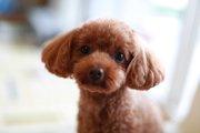 身近にある犬にとっての危険〜家の中も危険がいっぱい〜