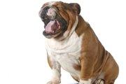 犬が毛玉を吐く理由と知っておきたい対処法