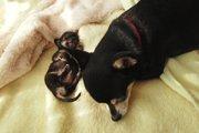 犬を飼う人が知っておきたい、犬に対する責任と社会に対する責任について
