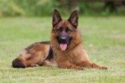 フランスで人気のある犬種ランキングTOP5